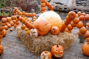 The Haunted Pumpkin Garden 3
