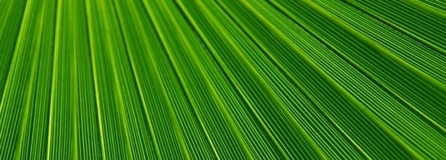 leaves_texture1470