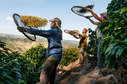 Steve McCurry - From These Hands A Journey Along The Coffee Trail 1