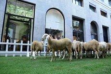 Wool week 1