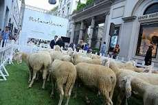 Wool week 3