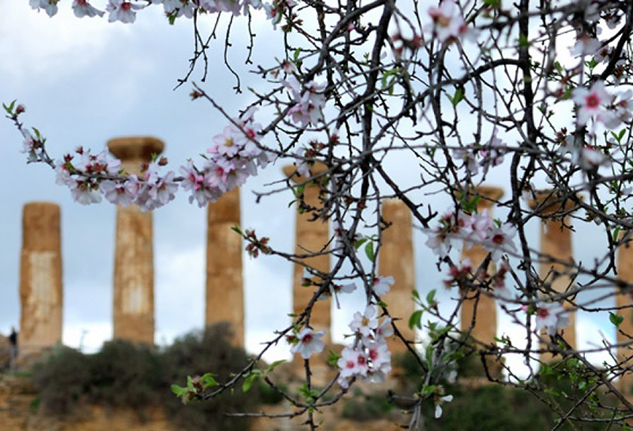 Mandorlo in fiore Agrigento