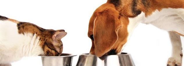 Qibo a roma ha aperto un laboratorio di cucina per cani - Cucina casalinga per gatti ...