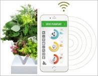 Plug Plant