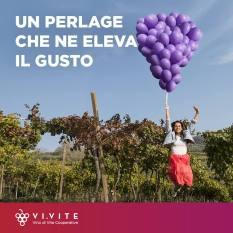 vivite (6)